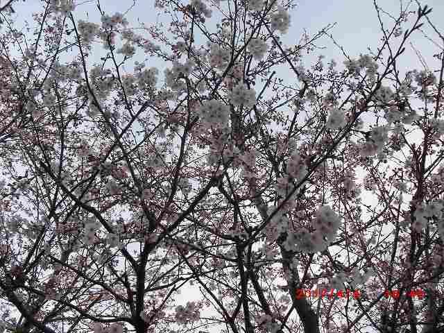花祭り(降誕会)のお知らせ